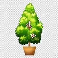 Green tree in clay pot vector