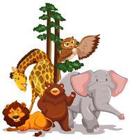 Fauna silvestre