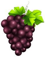 Raisins frais sur fond blanc