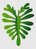 Folha verde no fundo transparente