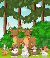 Deers and rabbits in the jungle