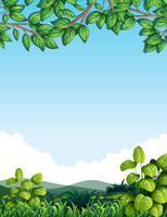 Natur mit Baumblättern