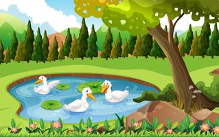Three ducks swimming in the pond