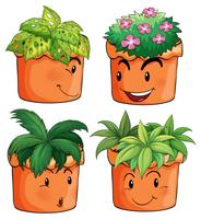 Vasi da fiori con diversi tipi di piante