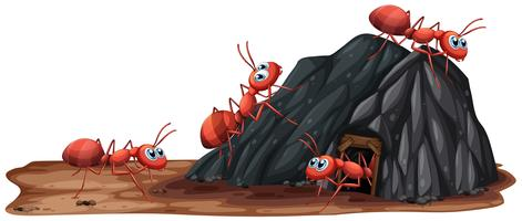 A Ants Family Living in Hole