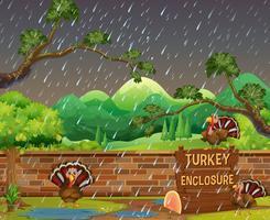 Escena del zoológico con pavos bajo la lluvia.