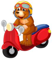 A bear riding scooter