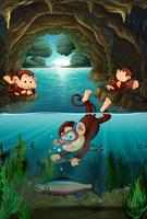 Monkey living in the cave