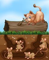 En katt som väntar på råtta i hålet