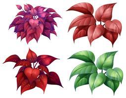 En uppsättning av färgglada växt