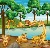 Giraffe and lion in the forest vector