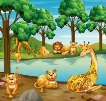 Jirafa y león en el bosque