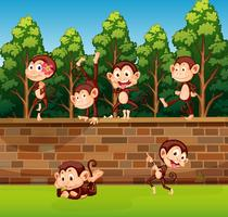 Monkey on the brick wall