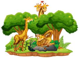 Giraffe on isolated nature landscape vector