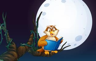 Een uil die een boek leest