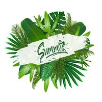 Tropical leaves around the sign summer on white background.