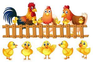 Família de frango com cinco pintinhos