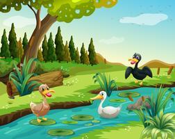 Escena con tres patos junto al estanque.