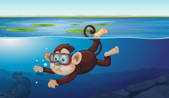 A monkey diving in the pond vector