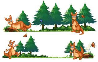 Canguros en el bosque de pinos
