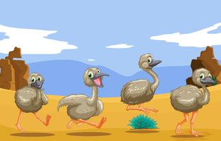 Little ostriches running in the desert