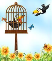 Två toucanfåglar i trädgården