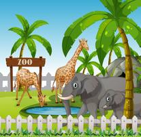 Giraffe and elephant at the zoo vector