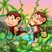 Two monkeys living on the island