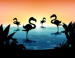 Scène Sihouette avec flamant rose dans l'étang