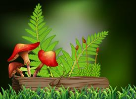 Scène de fond avec champignons et bûche