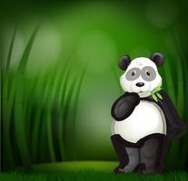 Lindo panda en un bosque de bambú