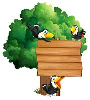 Wooden sign with three toucan birds