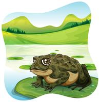 Green toad on water lily  vector