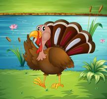 A turkey walking near the river