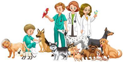 Veterinários e muitos animais