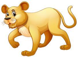 Petit lion marchant seul