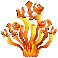 Clown fish swimming around coral reef