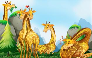 Many giraffes in the field