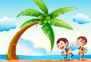 Apor och strand