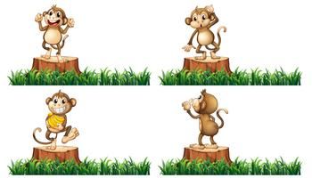 Happy monkeys on the stump trees