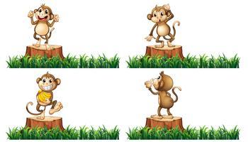 Macacos felizes no toco de árvores