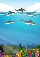 Delfiner som simmar i havet