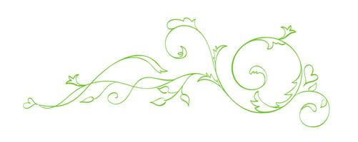 Green Vector Hand Drawn Calligraphic Separator. Spring Flourish Design Element. Floral light style decor for greeting card, web, wedding and print. Isolated on white background Calligraphy and lettering illustration