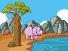 Söt flodhäst vid dammen