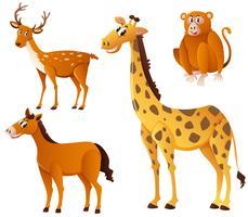 Olika typer av djur med brun päls