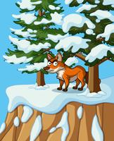 Fox standing on cliff in winter time