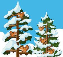 Squirrels climbing tree in winter