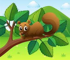 Eichhörnchen, das auf der Niederlassung sitzt