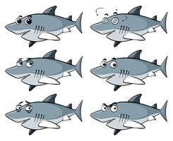 Great white shark with six different emotions