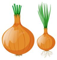 Onion with leaves and roots